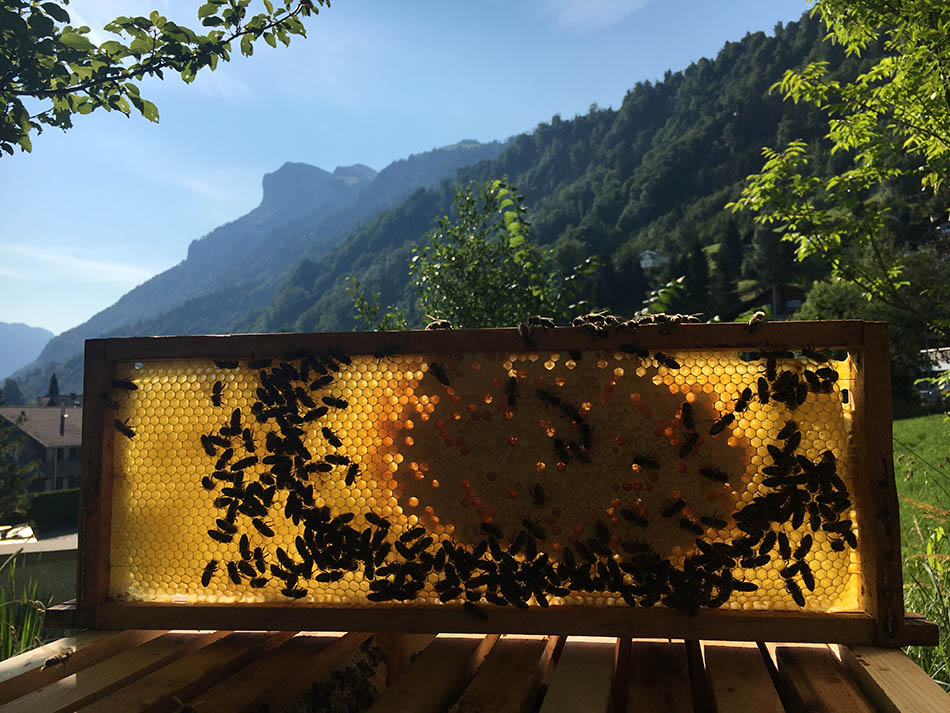 DR. SCHIER'S   Natural honey from the Swiss Alps   Discover Germany