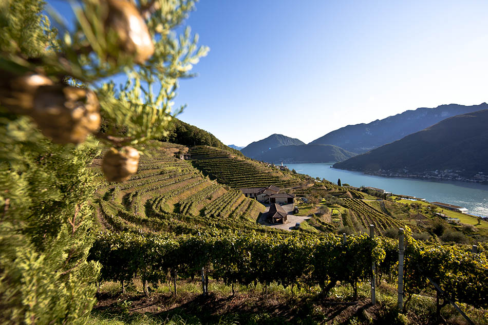 A renowned winery devoted to hospitality and culinary experiences   Discover Germany